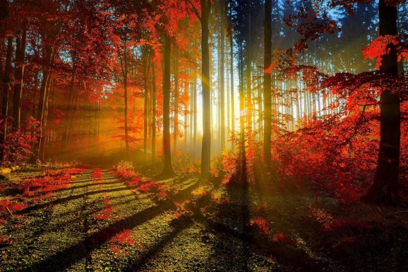 free download autumn wallpaper 2880x1800 image