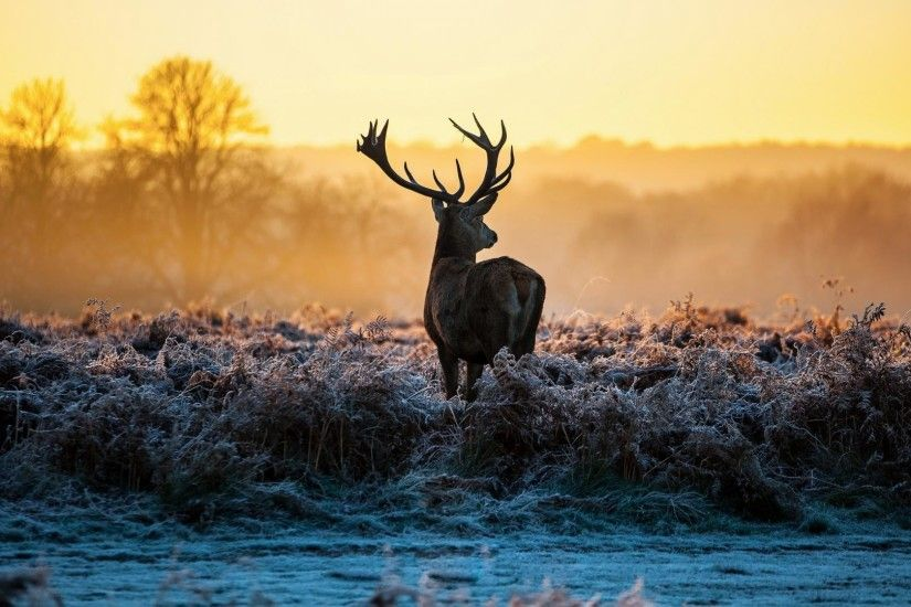 deer-morning-sunrise-1920x1080-1920%C3%971080-wallpaper-