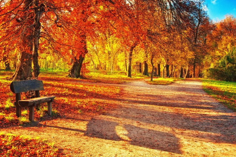 Colourful Leaves Fall Wallpaper