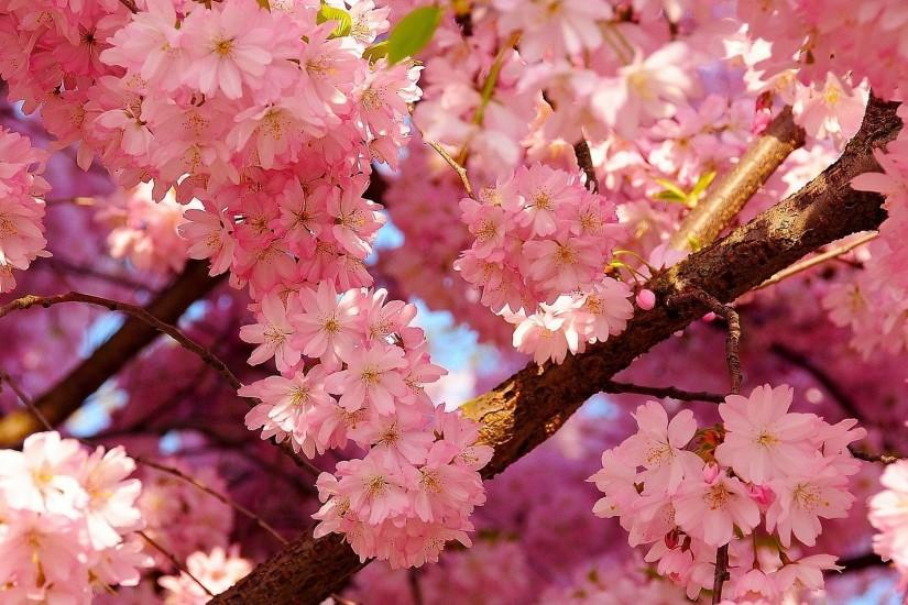 widescreen spring background 1920x1080 for windows 7