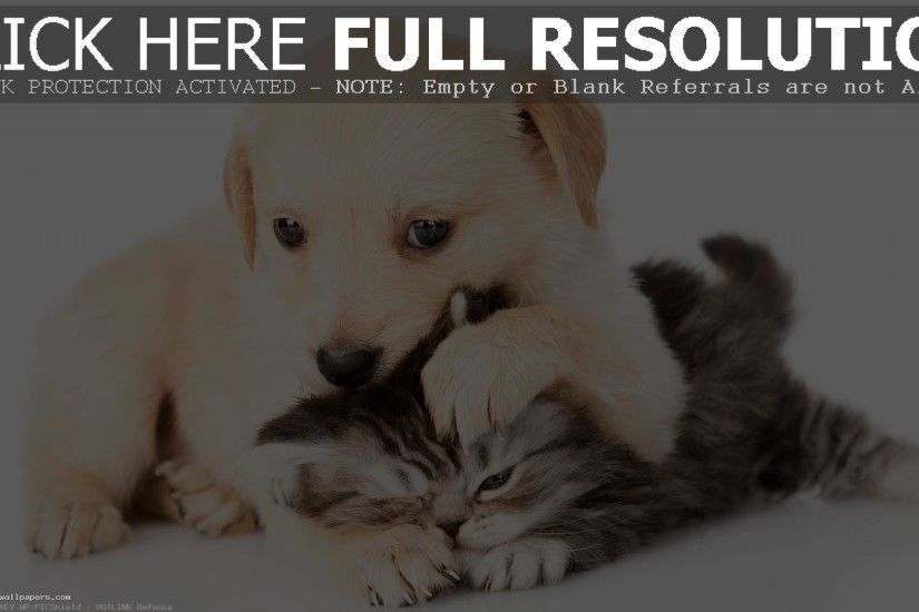 ... Kittens And Puppies Wallpapers 3D 4K wallpaper for desktop Cute Kittens  Puppies image download