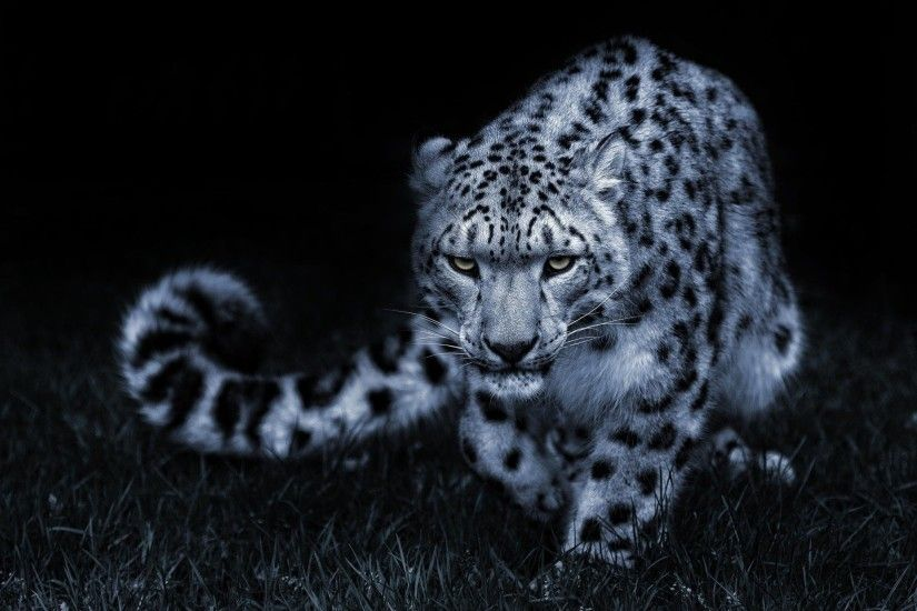 ... Leopard Black HD Wallpaper | 1080p Wallpaper ...
