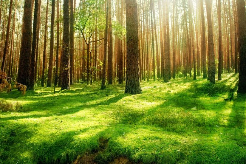... Forest Background Hd Tumblr Image Gallery - HCPR ...