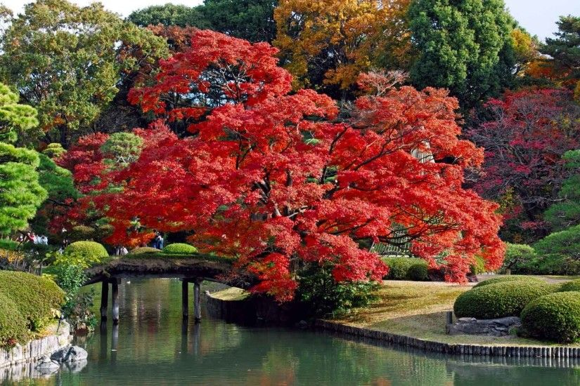 Landscapes Lakes Japan Trees Colors Bridges Autumn Nice Nature Wallpaper  Download