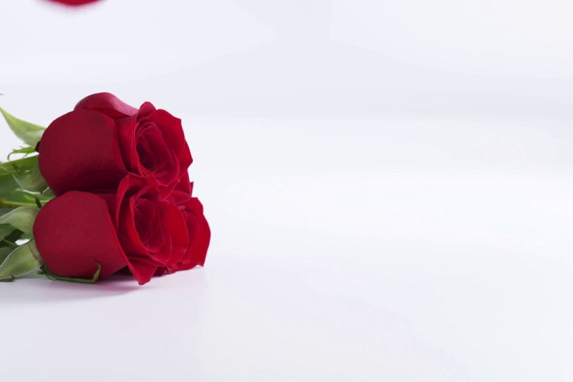 three red roses with falling petals on white background in slow motion,  180fps prores footage Stock Video Footage - VideoBlocks