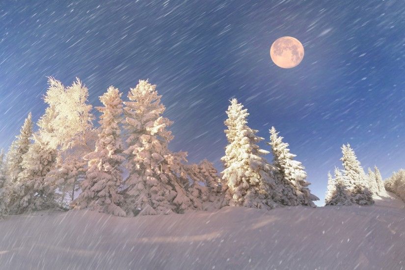 Tags: Snowy forest ...