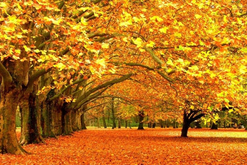 Fall Leaves Background - wallpaper.