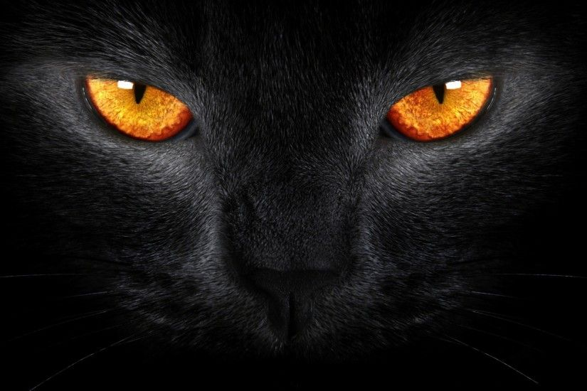 ... Warrior Cats Wallpaper Best Cool Wallpaper HD Download, Warrior .