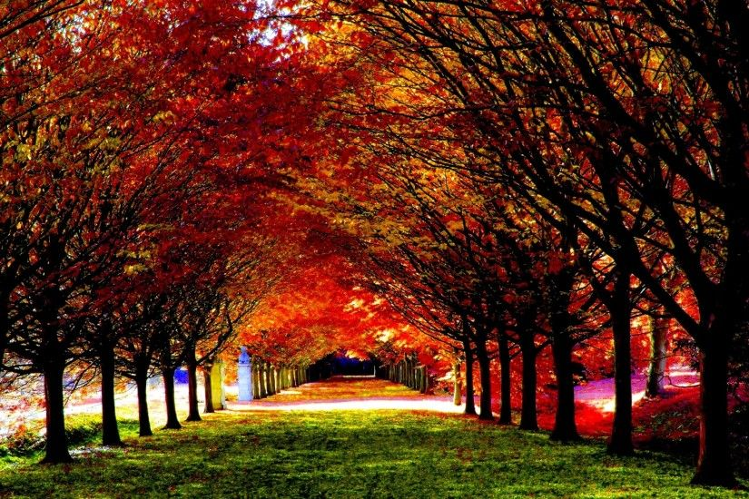 Earth Fall Season Nature Leaf Tunnel Path HDR Wallpaper