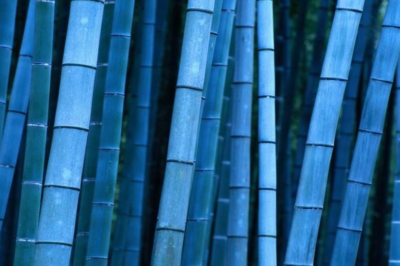 new bamboo wallpaper 1920x1080 for phone