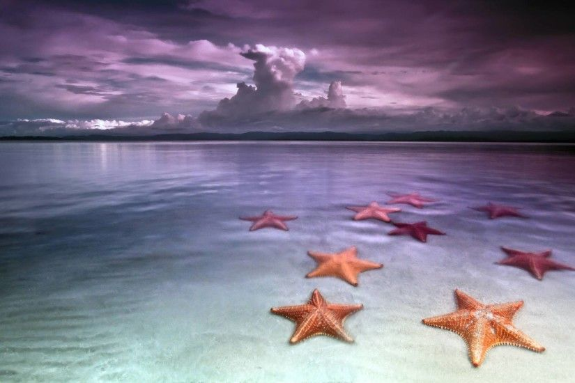 <b>Starfish Wallpapers</b>, HD <b>Starfish Wallpapers