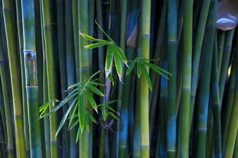 download bamboo wallpaper 2560x1600 for retina
