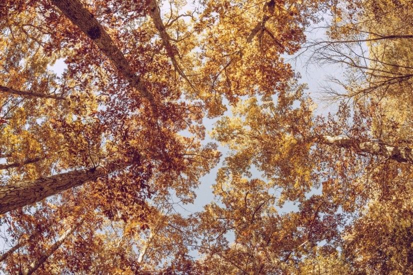 1920x1080 Wallpaper trees, view from below, autumn