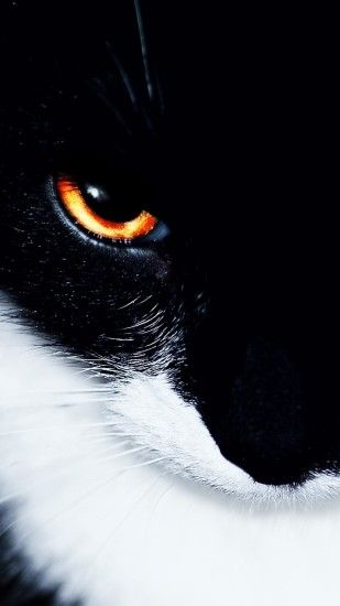Black wallpapers for android 1080x1920 cat-black-white-eye