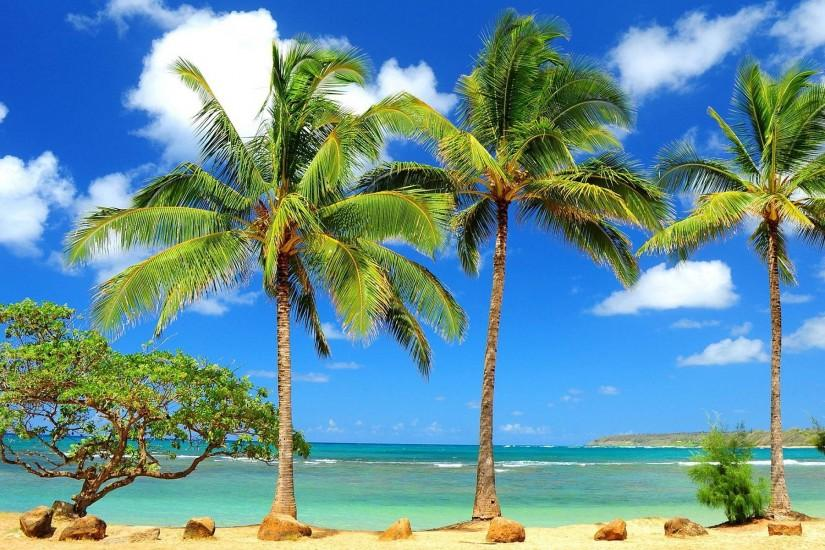 Palm Trees Wallpapers - Full HD wallpaper search