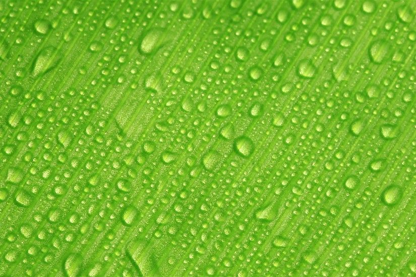HD: Water drops on green leaf background, 1920x1080 Stock Video Footage -  VideoBlocks