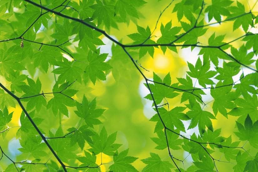best green autumn leaves background wallpaper