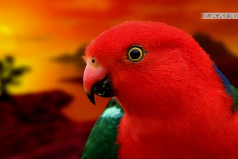 Colorful Parrots Wallpaper - wallpaper.