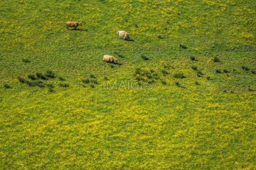 Animals, Countryside, Farm, Field, Grass