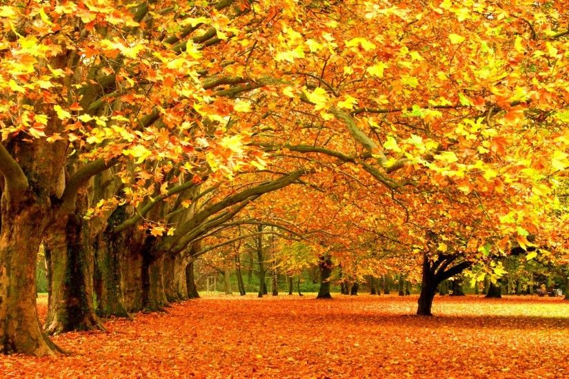 Wallpapers For > Autumn Trees Scenery Wallpaper