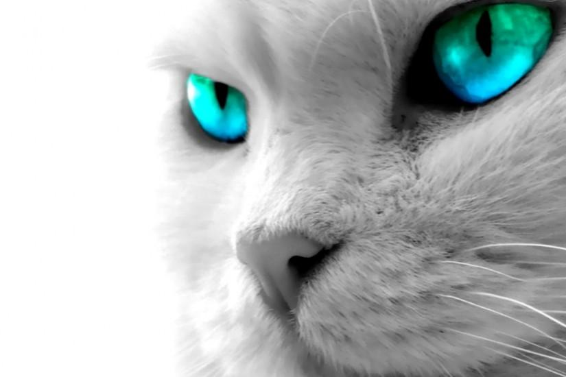 Cat Blue Eyes High Definition Wallpaper 1920x1080 | Full HD Wallpapers .