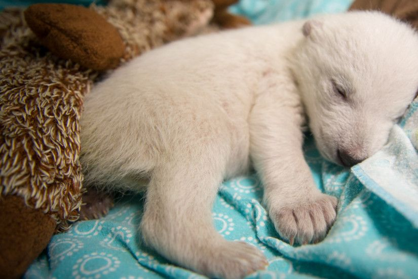 11 Fluffy Dogs Who Are Probably Polar Bears