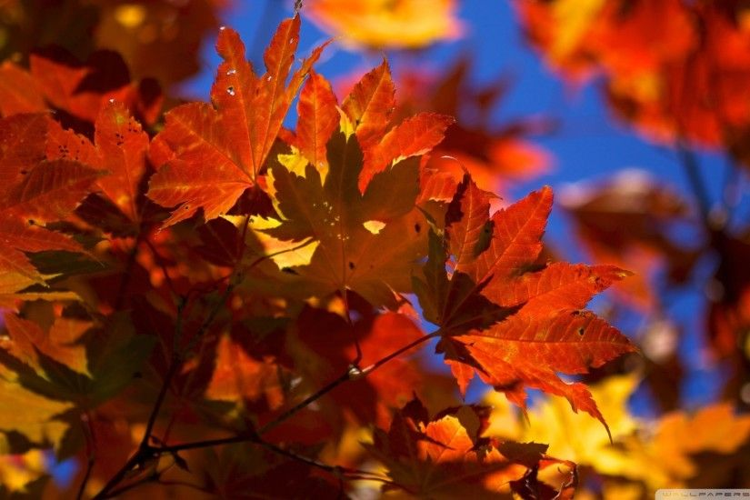 1920x1200 wallpaper, Fall Desktop Background hd hd wallpaper, background  desktop .