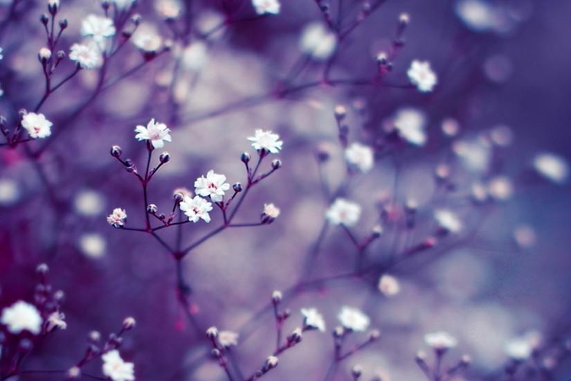 free download lavender background 3840x2160