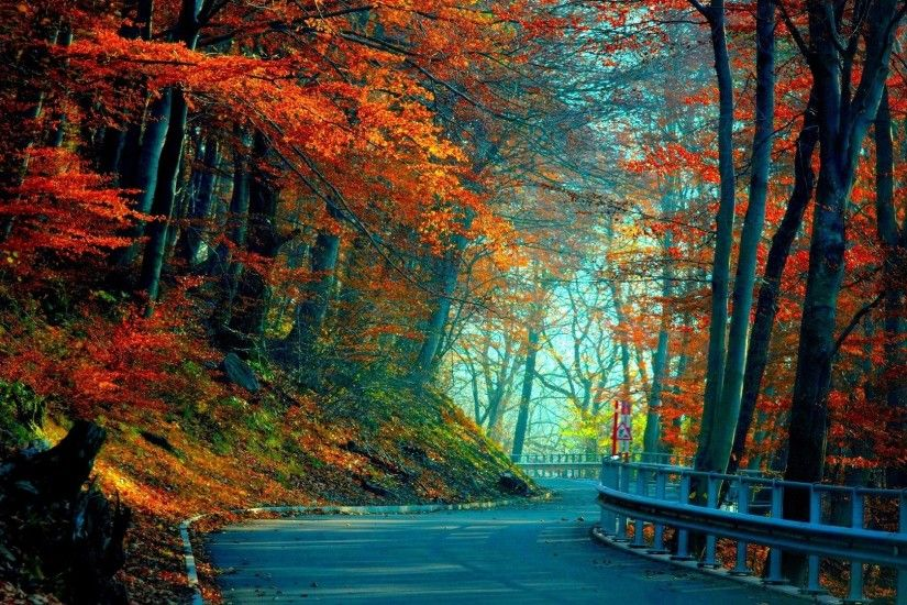 1920x1080 Wallpaper autumn, road, leaves