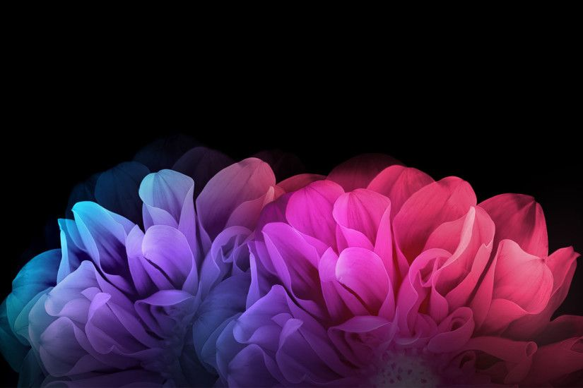 Nice colorful flowers with black background hd wallpaper for desktop. Â«Â«