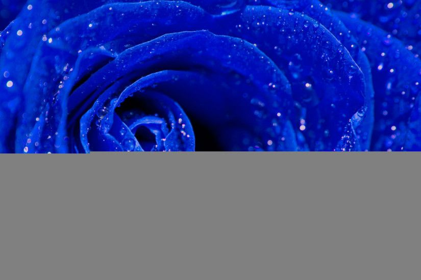 Blue Roses Background