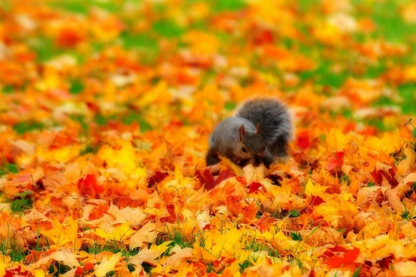 Fall with Animal Widescreen HD Wallpapers
