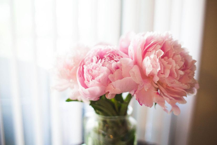 ... Peony wallpapers by Wallpaperxyz ...