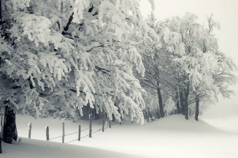 1920x1080 Wallpaper winter, snow, storm, trees, frost, snow drifts