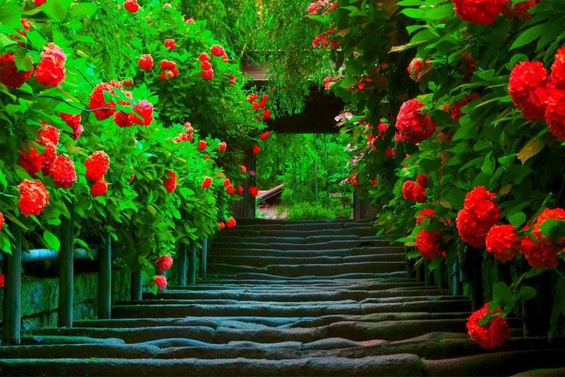#CC3322 Color - Splendor Bright Paradise Spring Beautiful Red Colors Flower  Path Green Nature Wallpaper