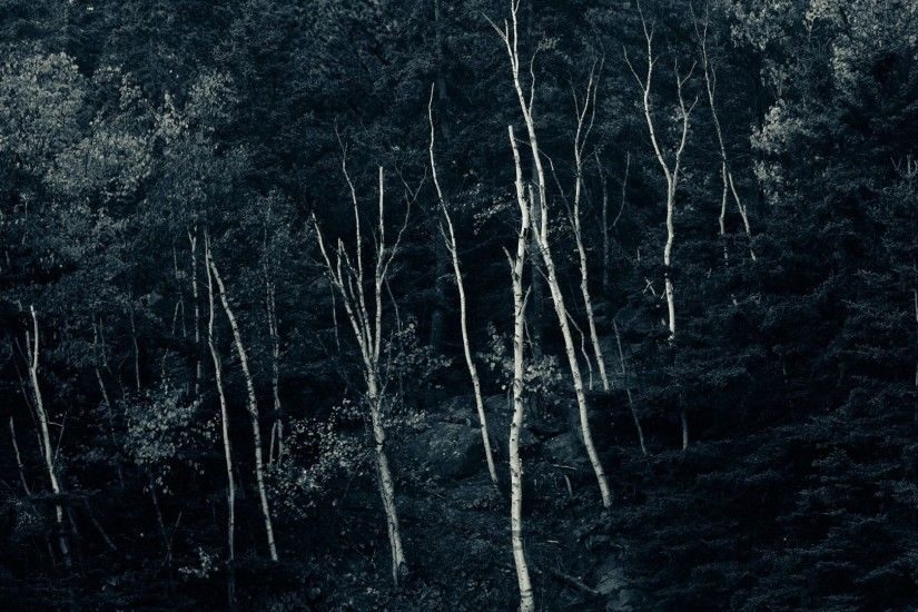 Trees - Forest Trees Dark Nature Black Night Wallpaper Free Download for HD  16:9