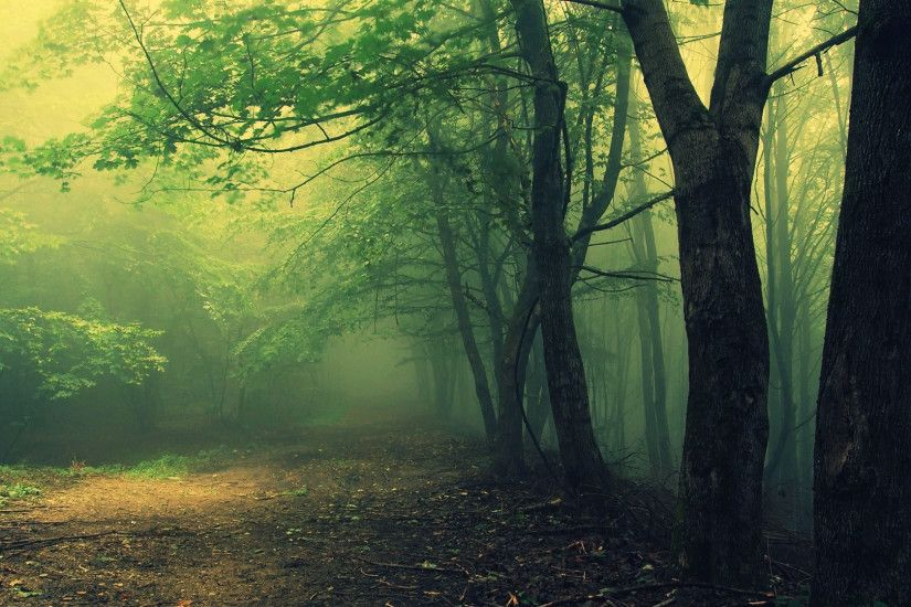 Scary Woods Wallpaper 20379