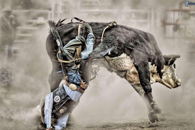 bucking bulls wallpaper backgrounds - photo #8. Rodeo · bucking bulls  wallpaper ...