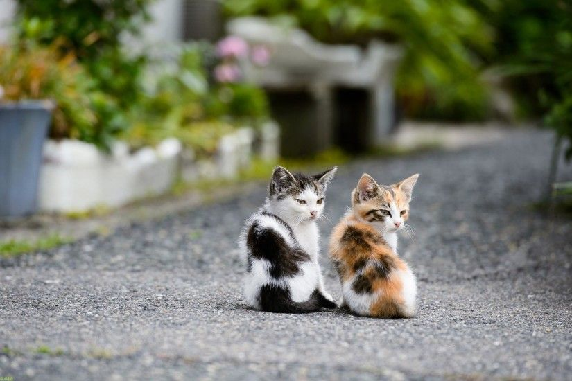 kittensplaying Cats Wallpapers Cute Cat And Kitten Cats Kittens