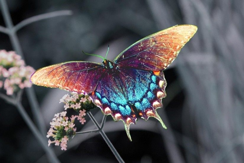 1920x1080 Wallpaper butterfly, insect, flower