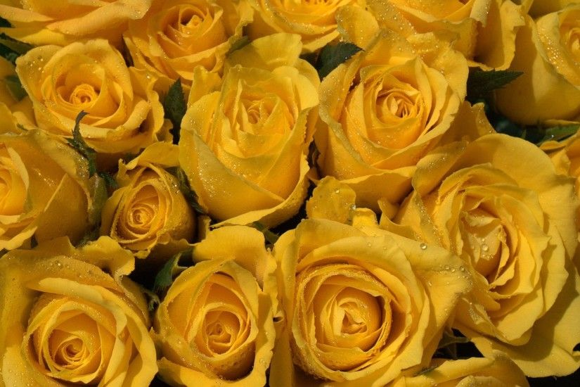 Yellow Roses Background Wallpapers Browse | HD Wallpapers | Pinterest | Yellow  roses and Wallpaper