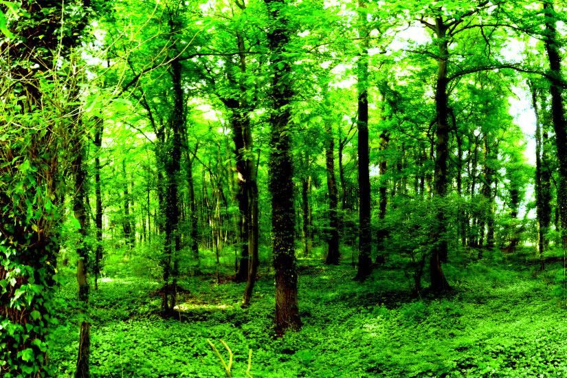 From free wallpapers nature wallpaper dark green forest wallpaper .