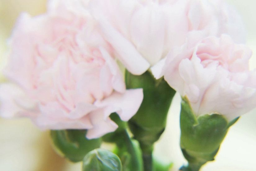 White Roses Rotating on a Golden Background Stock Video Footage -  VideoBlocks