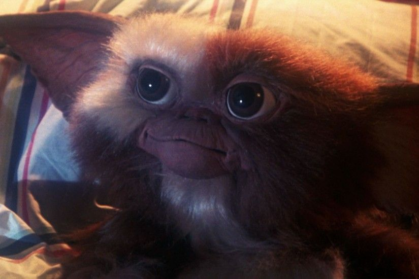 ... Gizmo Gremlins Wallpapers Wallpaper Cave Nice Gizmo From Gremlins  Wallpaper These are High Quality and High