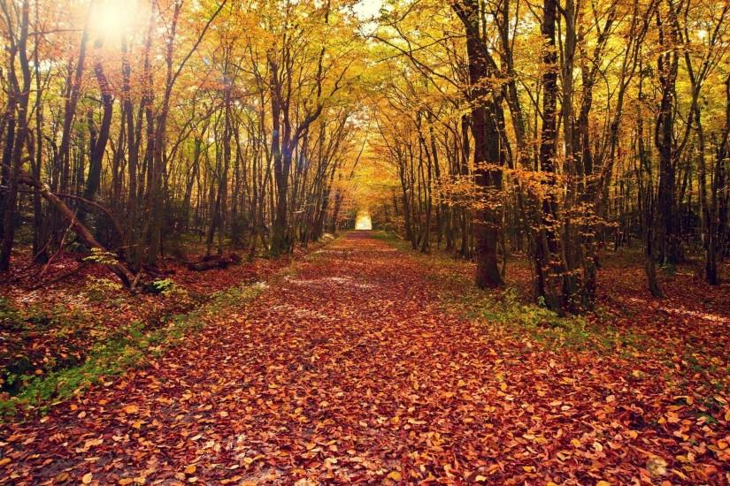 Autumn Forest Backgrounds, wallpaper, Autumn Forest Backgrounds hd .