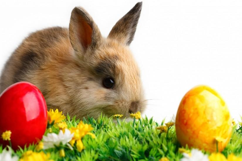 2048x1152 Wallpaper rabbit, easter, eggs, grass, white, flowers