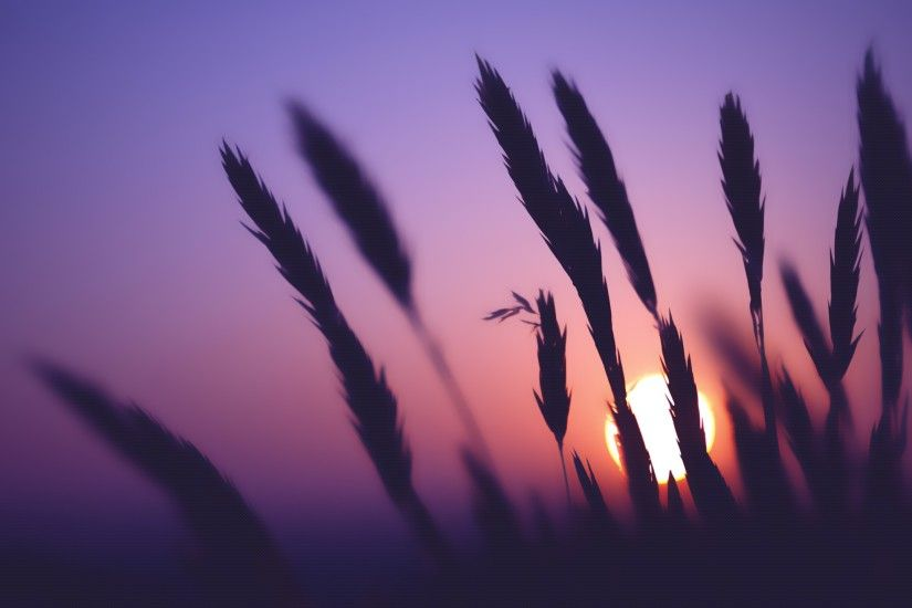 Purple Sky Wheat Sunset Time desktop wallpaper | WallpaperPixel