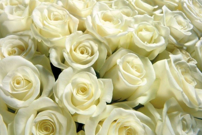 Cool Backgrounds Images White Rose , Wallpapers, HD Wallpapers .