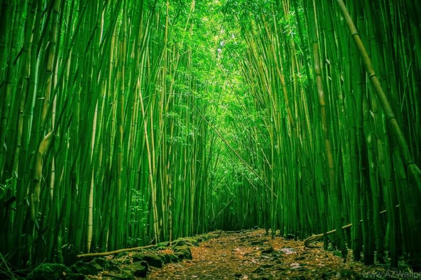 download free bamboo background 2560x1440 4k