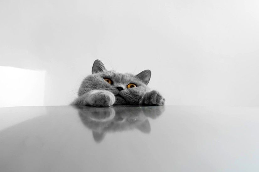 A few HD funny cat wallpapers Funny cats | HD Wallpapers | Pinterest | Hd  wallpaper and Wallpaper